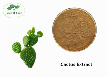 China Pure Natural Chinese Herb EXtract Cactus Extract Powder For Losing Weight supplier