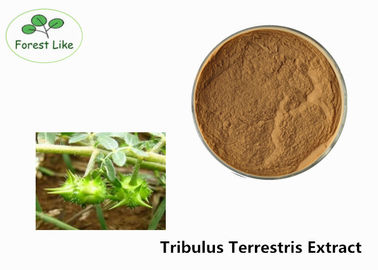 China Herba P.E. Tribulus Terrestris Extract 90% Saponins Powder for Sex Enhancement supplier