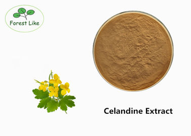 China Natural Chelidonium Majus Extract Herb Celandine Extract CAS 476-32-4 For Health Care supplier