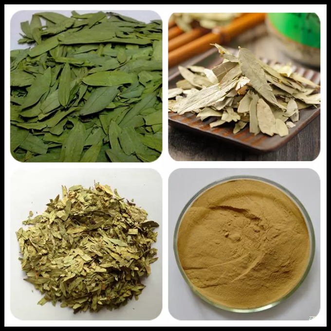 Natural Plant Extract Natural Weight Loss Powder , Senna Leaf Extract 12% Sennoside Powder